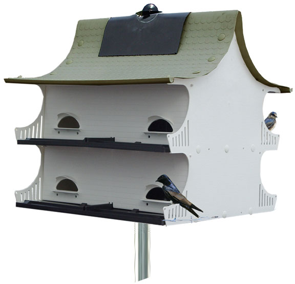 The 8 Family Purple Martin Great Eight House Purple Martin
